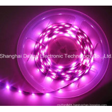 SMD5050 10mm CE Approved Flexible LED Strip Light