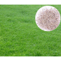 Animal food Forage grass seed Perennial ryegrass