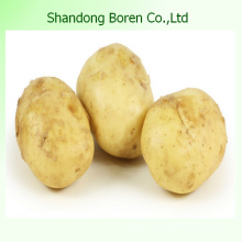Precio competitivo de calidad superior Patata fresca
