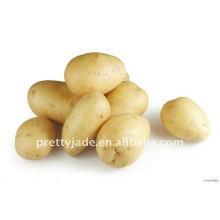 Supply fresh yellow potato from China