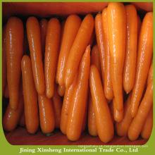 Saudável, novo, colheita, fresco, cenoura