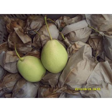 Crip et Sweet Green Pear