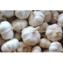 2018 new crop garlic pure white garlic price