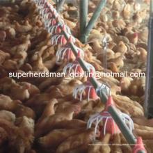 Komplette Set-Qualitäts-automatische Geflügel-Landwirtschafts-Ausrüstung