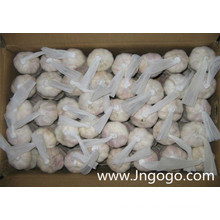 Nueva cosecha Fresh Good Quality Normal White Garlic 5.0
