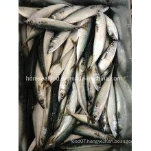 Fresh Frozen Seafood Mackerel Fish