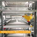 Cinto PP automático fim aves estrume sistema removendo para galinheiro