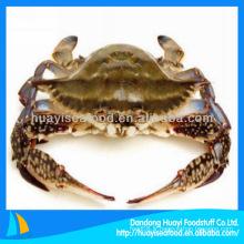 Crabe congelé de natation bleue Portunus Pelagicus Crabe