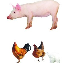 (Tiamulin Hydrogen Fumarate) _Antibiotics Tiamulin Hydrogen Fumarate