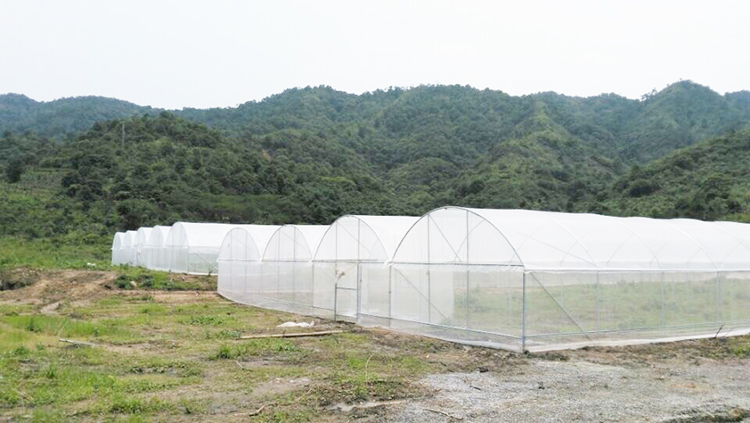 Insect-Proof Net for Greenhouse