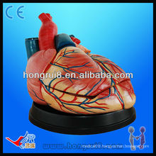 high quality Human anatomy medical heart model for sale new style jumbo heart model