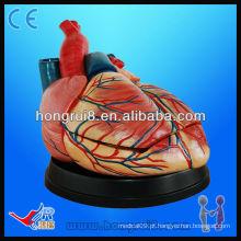 Alta qualidade anatomia humana modelo de coração médico para venda modelo novo modelo de coração jumbo