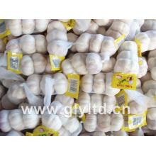 Jinxiang New Crop Fresh ail
