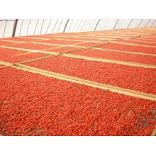 A granel las bayas de Goji originadas de Ningxia