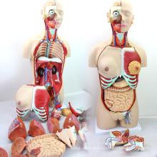 TORSO04 (12015) modèle de torse de luxe de sexe médical de 85cm de science médicale avec le dos ouvert, 29 partie, modèle anatomique humain pour l'école