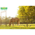 High Quality Hot Sale Galvanized Cattle Horse Fence