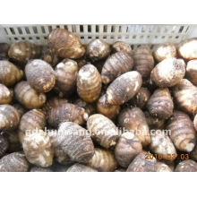 Taro chinês de legumes frescos