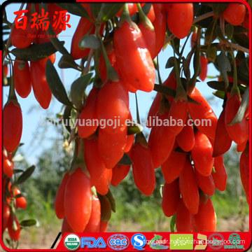 Nouvelle arrivée goji berry gros prix bio séché goji berry fournisseur certifié
