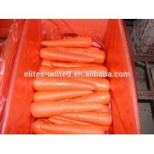 Cenoura fresca de alta qualidade