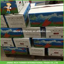 Emballage de carton de légumes frais 2016 pour prix de carottes fraîches