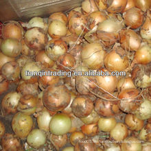 2012 gelbe Zwiebel zum Verkauf
