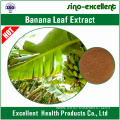 Natural Banana Leaf Extract
