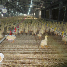 New Product Automatic Duck Feeder Line