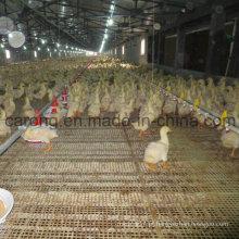Linha de Alimentador Automático de Patos