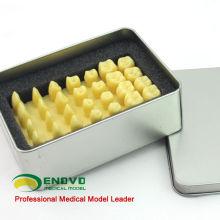 TOOTH05 (12574) 1.2x Modelo de procedimiento de talla de corona de tamaño natural con latas de aluminio Easy Carry
