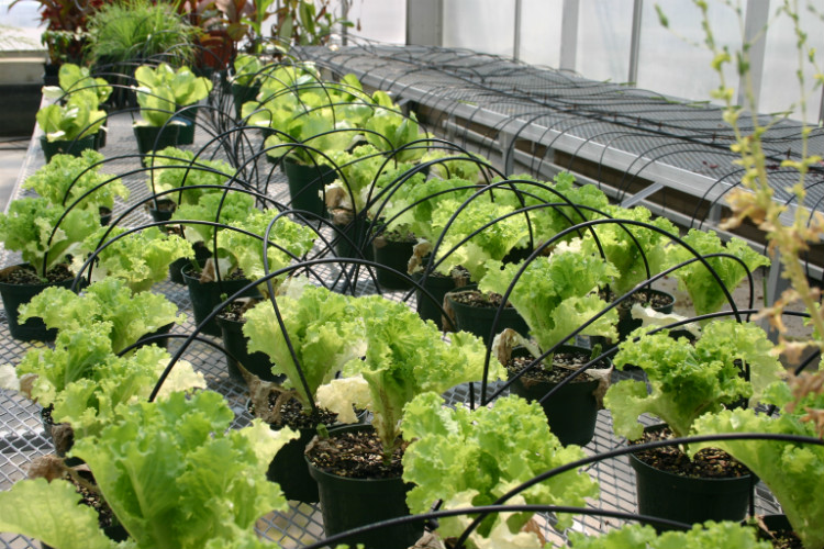 Drip Irrigation In Pots