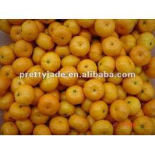 chinese nanfeng baby mandarin