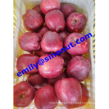 Nuevo Huaniu Apple Grade a
