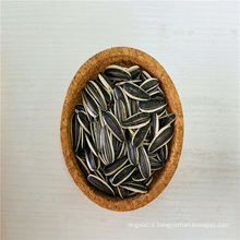 Dried Melon Seeds Oven Sunflower Seeds Tunel