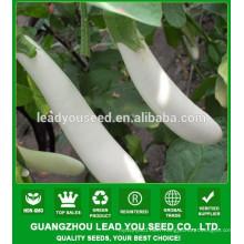 NE04 Mychy Long hybrid nice white color eggplant seed seeds