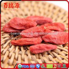 Receitas de bagas de Goji bebe receitas de bagas de goji congeladas bagas de goji e medicamentos para diabetes