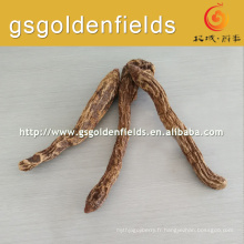 Chinoise brute Cynomorium songaricum
