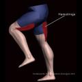 Appareil de fitness pour sujettes Leg Curl (M7-2009)