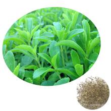 Guarantee Germination 2019 Chinese Vegetable Sugar Plant Stevia Seeds