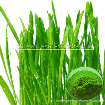 Polvo de hierba de cebada orgánica USDA