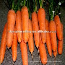 Cenoura fresca da China