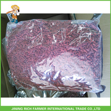 Secado Goji Berry Exportador na China Goji Berry 500g grãos / 50g Em 5kg Bag 20kg Carton
