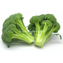 Broccoli poeder