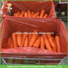 Nouvelle carotte fraîche au prix compétitif