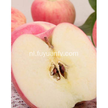 New Crop Fresh Goedkope Qinguan apple (64-198)