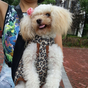 Pet Backpack Portable Pet Legs Out Carrier