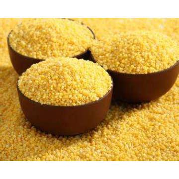 Painço chinês, painço amarelo, nutrindo o estômago, terapia dietética