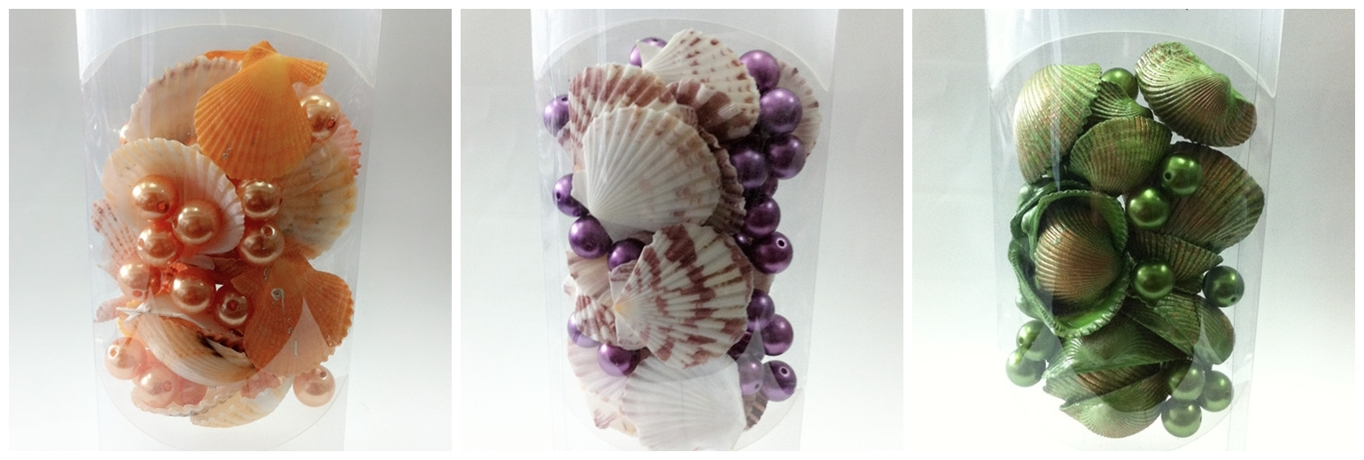 Natural Seashell Craft