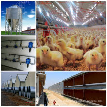 High Quality Automatic Full Set Poultry Farming Equipment