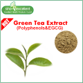 Extracto de té verde natural con polifenoles