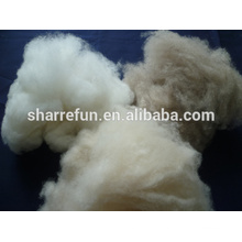 carded and dehaired cashmere fiber for India market